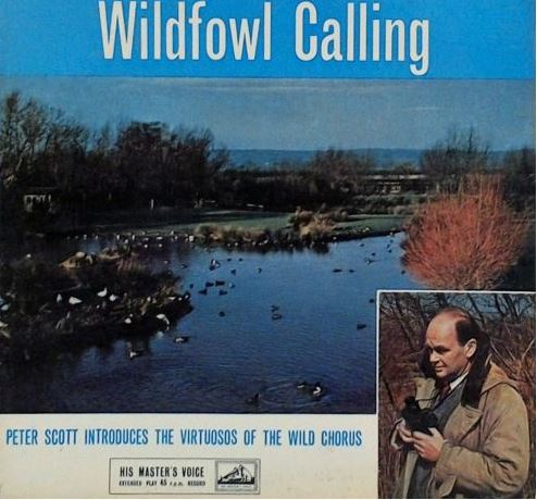 Wildfowl Calling